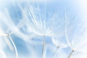 Abstract Dandelion Background by Anna Omelchenko
