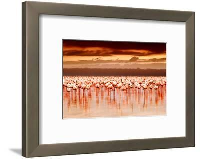 African Flamingos in the Lake over Beautiful Sunset