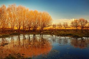 Beautiful Autumn Landscape, Dry Trees, Blue Sky, Tree Reflected in Lake, Seasons Change, Sunny Day, by Anna Omelchenko