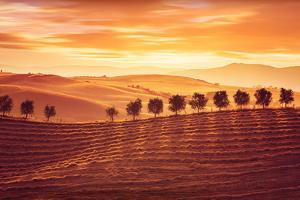 Beautiful Countryside Landscape, Amazing Orange Sunset over Golden Soil Hills, Beauty of Nature, Ag by Anna Omelchenko