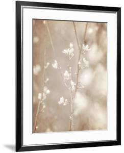 Cherry Tree Blossom, Abstract Soft Color Floral Background by Anna Omelchenko