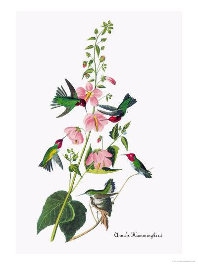 Anna's Hummingbird-John James Audubon-Art Print
