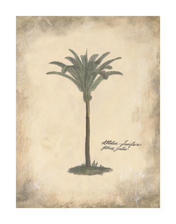 Fibres Palm