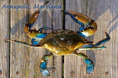 https://imgc.artprintimages.com/img/print/annapolis-maryland-blue-crab-on-dock_u-l-q1gqp0n0.jpg?p=0