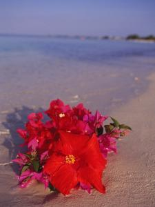 Hibiscus and Bouganvilla on Beach, Cayman Islands by Anne Flinn Powell