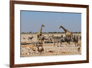 A Group of Animals at the Watering Hole, Giraffe, Springbok, Gemsbok and Zebra by Anne Keiser