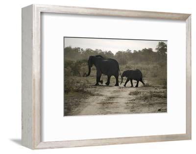 One Adult, and One Baby Elephant, Selinda Camp, Botswana