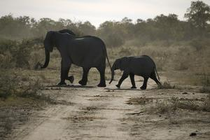 One Adult, and One Baby Elephant, Selinda Camp, Botswana by Anne Keiser