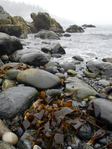 Seaweed Among Stones on a Rocky Shore with Gentle Surf by Anne Keiser