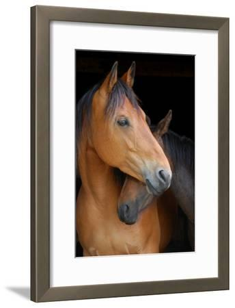 Head Shot of Horse and Pony Hugging on Dark B/G