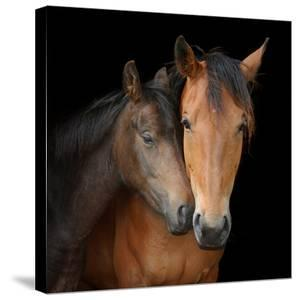 Young Horse Nuzzles into Neck of Larger Horse by Anne Louise MacDonald