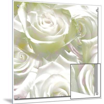 Roses, c.2008