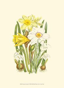 Summer Garden I by Anne Pratt