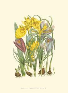 Summer Garden III by Anne Pratt