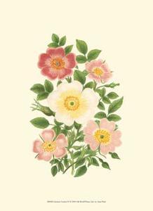 Summer Garden IV by Anne Pratt