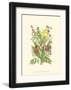 Summer Garden IX by Anne Pratt