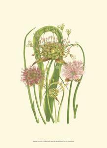 Summer Garden VI by Anne Pratt