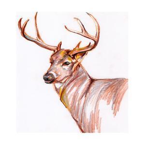 Deer in Pencil by Anne Seay