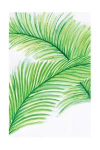 Palm Leaves by Anne Seay