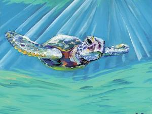 Turtle by Anne Seay
