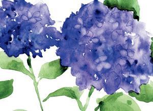 Bright Hydrangeas by Anne Tavoletti