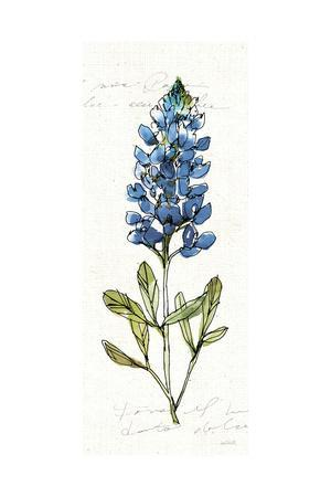 Texas Bluebonnet IV