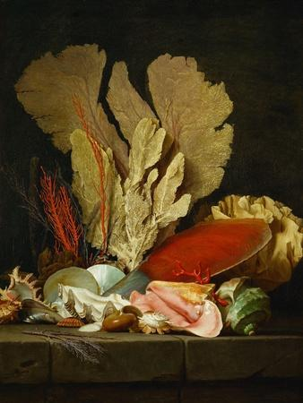 Panaches de mer, lithophytes et coquilles-Still-life with shells and coral Canvas, 130 x 97 cm