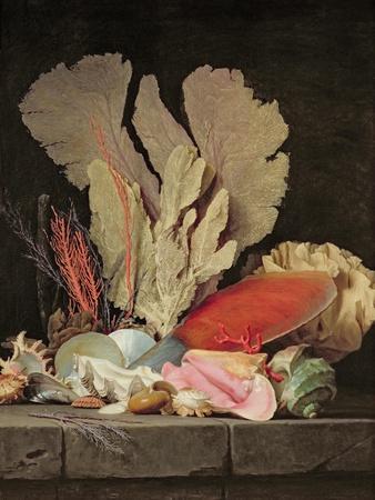 Seaweed, Lithophytes and Seashells