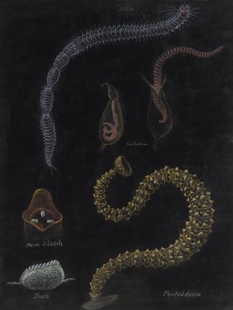https://imgc.artprintimages.com/img/print/annelid-worms_u-l-pk67cc0.jpg?p=0