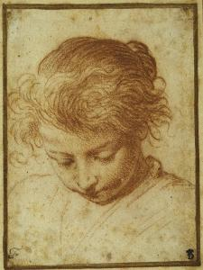 Head of a Young Girl Looking Downwards by Annibale Carracci