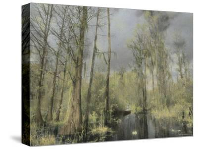 A Canoeist Paddles Through a Cypress Swamp