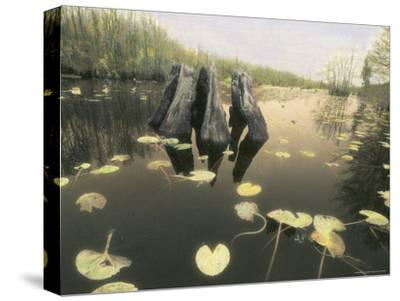 A Decaying Tree Stump Stands in a Slough in a Southern Swamp