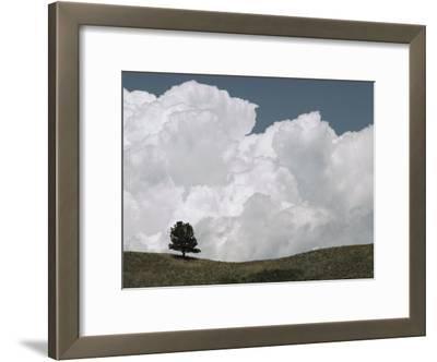 A Lone Ponderosa Pine Tree under a Cloud-Filled Sky