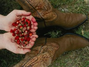 A Pair of Hands Holds Wild Strawberries Between a Pair of Cowboy Boots by Annie Griffiths Belt