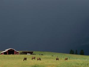 An Ominous Sky over Horses Grazing on a Flathead Valley Ranch by Annie Griffiths Belt
