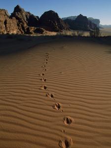 Animal Tracks Mark the Desert Land of Wadi Rum by Annie Griffiths Belt