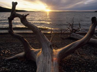 Driftwood Along the Shoreline of Yellowstone Lake