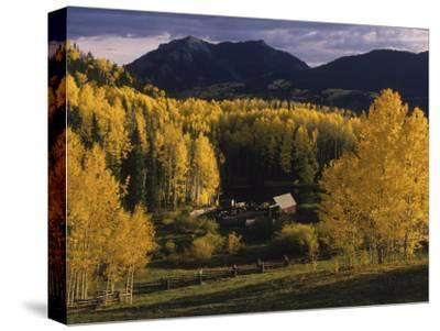 Farm Nestled Among Aspen Trees in Fall Colors and Mountains, Telluride, Colorado