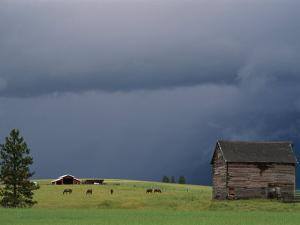 Ominous Clouds Gather over Horses Grazing on a Flathead Valley Ranch by Annie Griffiths Belt