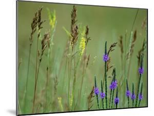 Prairie Grasses and Prairie Flowers by Annie Griffiths Belt
