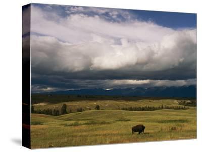 Clouds Hover over a Free-Roaming Bison on the National Bison Range