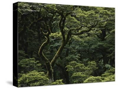 Moss-Covered Tree in Fiordland National Park