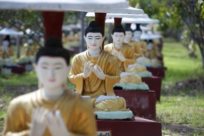Buddha Statues Each Planted Alongside a Bo Tree in Maha Bodhi Ta Htaung, Myanmar (Burma)