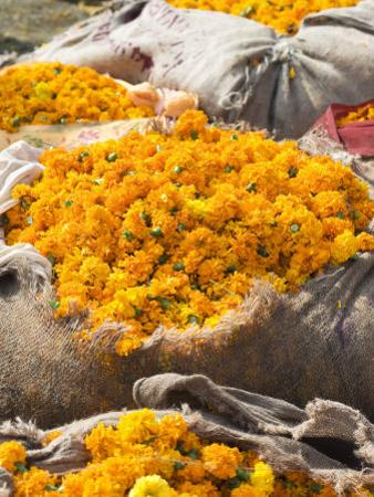 Marigolds Tied Up in Sacking Ready for Sale, Flower Market, Bari Chaupar, Jaipur, Rajasthan