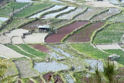 Mixed Paddy Fields Growing Vegetables under Highly Efficient Jhum System of Slash and Burn, India