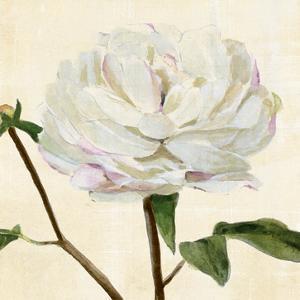 Peony in Bloom I by Annie Warren