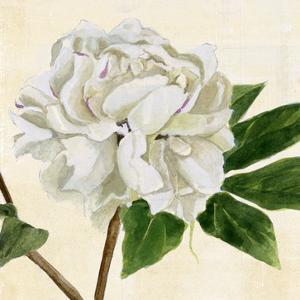 Peony in Bloom II by Annie Warren