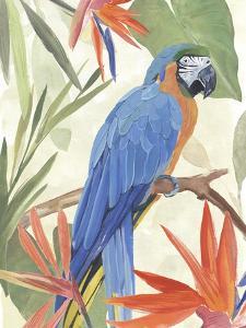 Tropical Parrot Composition IV by Annie Warren