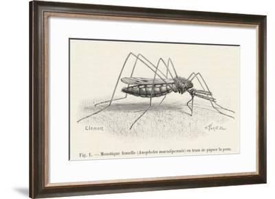 Anopheles Maculipennis a Female Mosquito Biting Human Skin--Framed Giclee Print
