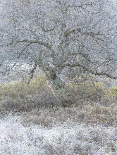 Another Winter-Doug Chinnery-Photographic Print